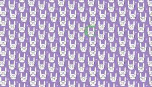 bawełna w kotki